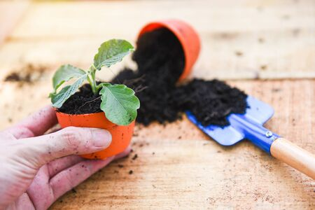 Hand planting flowers in pot with soil on wooden background  works of gardening tools small plant at back yard 版權商用圖片