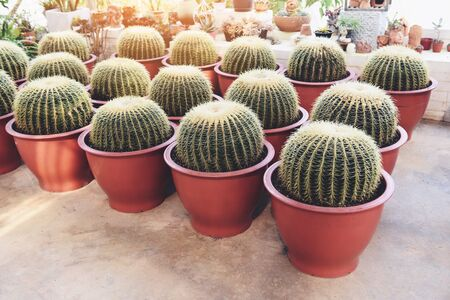 Home gardening and decorating indoor microgreen greenhouse environments secret gardens and modern gardening setups cactus pot ornamental plants gardening and greenery in workspaces Stock Photo
