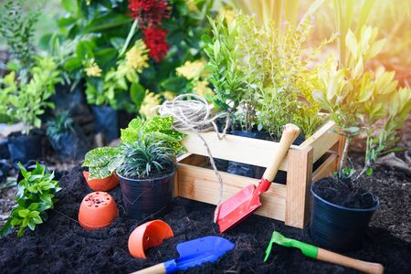 Gardening tools on soil background ready to planting flowers and small plant in the spring garden works concept gardening flower pots in sunny at back yard /