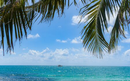 Tropical coconut leaf palm tree on the beach with sun light on blue sky sea and ocean cloud and tourist boat background / Summer vacation sea and nature travel adventure