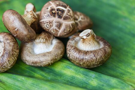 Fresh mushrooms on banana leaf background / Shiitake mushrooms