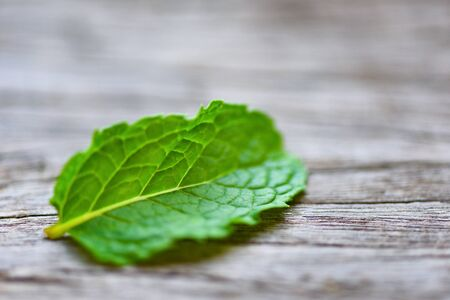Peppermint leaf on wooden background / Fresh mint leaves nature green herbs or vegetables food Фото со стока