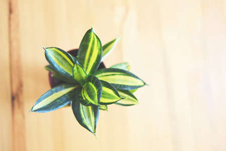 plant in pot on the wooden table background , top view / pot plant in house creative minimal of green leaves nature concept