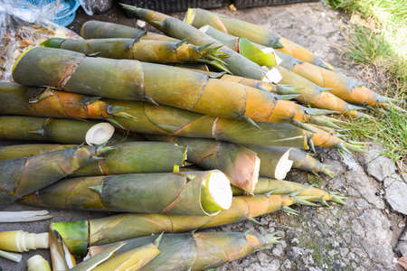 Pile of bamboo shoot from nature forest for sale at the market / Bamboo shoots asian thailand
