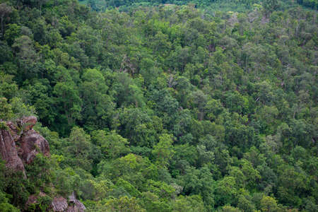 forest trees background / jungle nature green tree on the mountain top view , forest landscape scenery of river in southeast Asia tropical wild