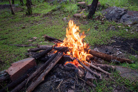 fire camping burning wood / bonfire forest