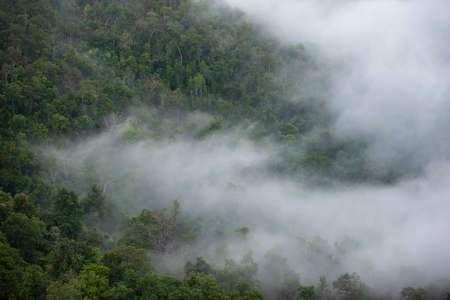 Foggy morning mist in valley beautiful in Thailand Asian / Misty landscape mountain fog and forest tree view on top
