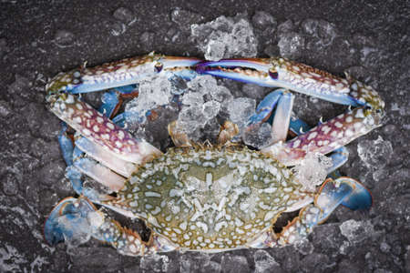 Seafood crab on ice / Fresh raw Blue Swimming Crab ocean gourmet with ice on dark background in the restaurant