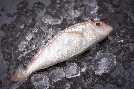 Fresh fish on ice market / sea bream seafood fish frozen Zdjęcie Seryjne