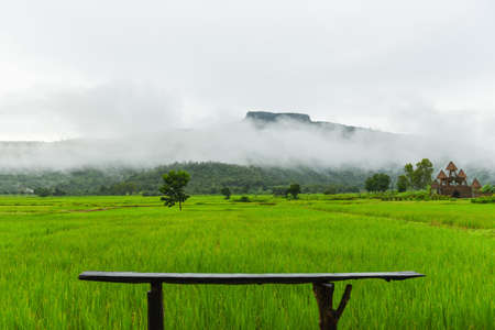 Wooden bench on the green rice field with fog mist and mountain background in the rainy season , Landscape Asian Nature Zdjęcie Seryjne