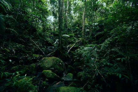 green fern tree nature in the rain forest / Landscape dark tropical forest lush and water stream River