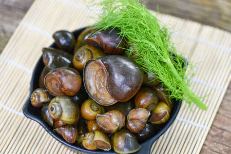 Apple snail freshwater snail river from nature field for food cooked Thai local food, Pila ampullacea shellfish