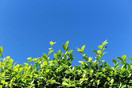 Green leaves background with blue sky or the natural walls texture, Green leaf square frame