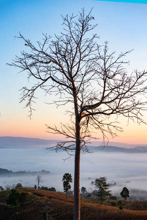 foggy landscape forest in the morning beautiful sunrise mist cover mountain background with tree at countryside winter 写真素材