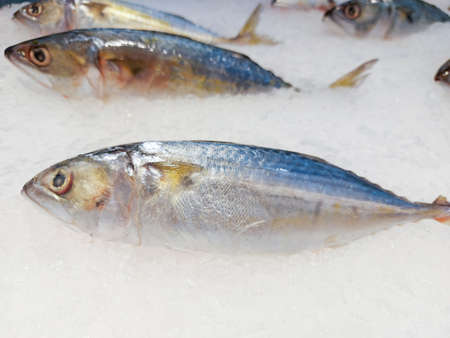 Fish on ice in the market, Fresh raw mackerel fish 写真素材