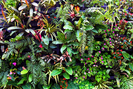 Plant wall with lush green colors, variety plant forest garden on walls orchids various fern leaves jungle palm and flower decorate in the garden rainforest background 写真素材 - 165333529