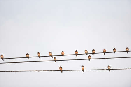 Birds on the wire, Little birds on a cable