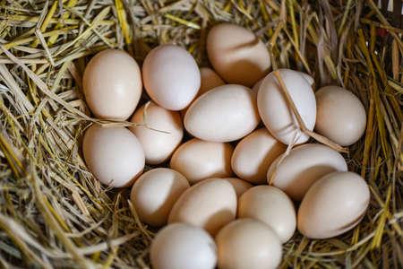 easter eggs on basket nest, fresh egg on egg farm