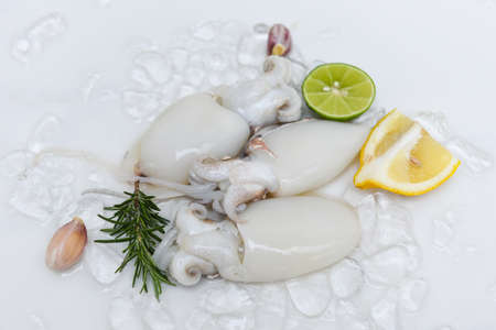 Seafood squid on ice for cooking food in the restaurant, Fresh raw octopus cuttlefish ocean gourmet with lemon and rosemary on white plate