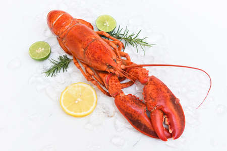 Fresh lobster food on white plate background, Red lobster dinner seafood with herb spices lemon rosemary on ice in the restaurant gourmet food healthy boiled lobster cooked 版權商用圖片