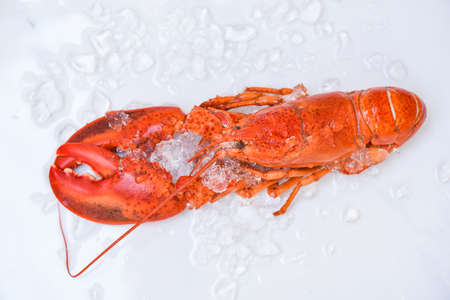 Fresh lobster food on white plate background, Red lobster dinner seafood on ice in the restaurant gourmet food healthy boiled lobster cooked, top view