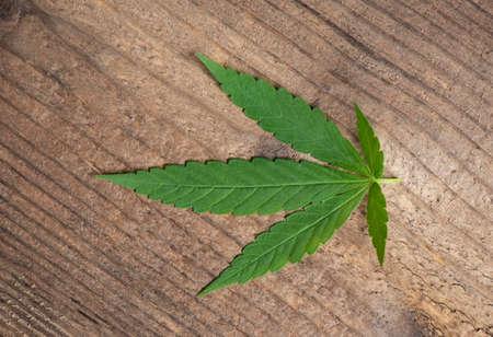 cannabis leaf on wooden background, marijuana leaves cannabis plant hemp cbd tea