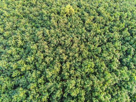 Aerial view forest tree environment forest nature background, Texture of green tree top view forest from above