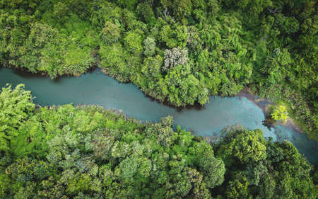 Aerial view river forest nature woodland area green tree, Top view river lagoon pond with blue water from above, Bird eye view green forest beautiful fresh environment landscape jungles lake