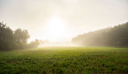 foggy landscape on green field in the morning, nature misty beautiful in the sunny foggy view