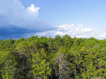 Aerial view forest tree environment forest nature blue sky background, Texture of green tree top view forest from above landscape bird eye view pine forest asian