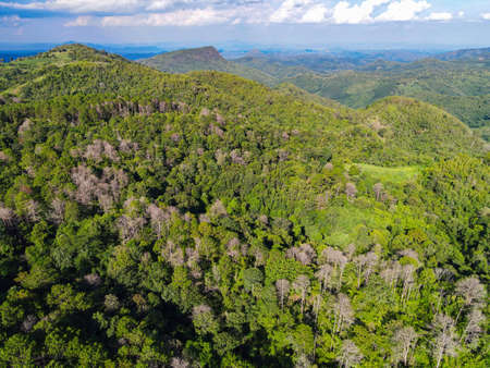 Aerial view forest tree environment forest nature background, Texture of green tree top view forest from above, pine and bamboo forest mountain background