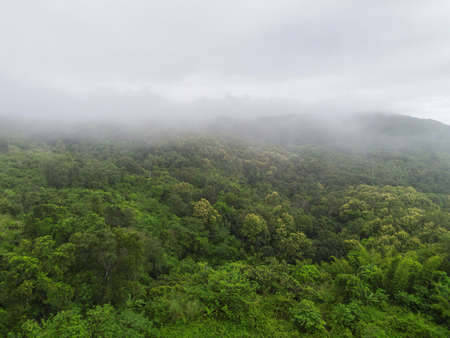 Aerial view forest tree environment nature background, mist on green forest top view foggy landscape the hill from above, pine and forest mountain background