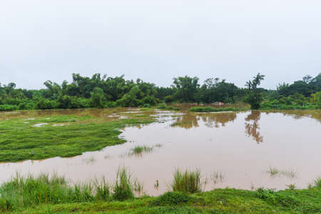 Aerial view river flood forest nature woodland area green tree, Top view river lagoon pond with water flood from above, landscape jungles lake flowing wild water after the rain