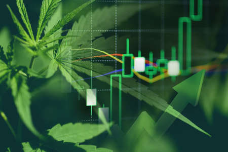 Cannabis business with marijuana leaves and stock graph charts on stock market exchange trading analysis investment, Commercial cannabis medicine money higher value finance and trade profit up trends