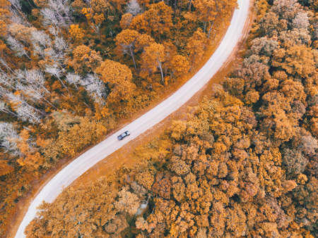 Aerial view car on road forest tree environment forest nature background, Texture of yellow orange tree and dead tree top view forest from above landscape bird eye view pine forest Autumn Orange Rush Zdjęcie Seryjne