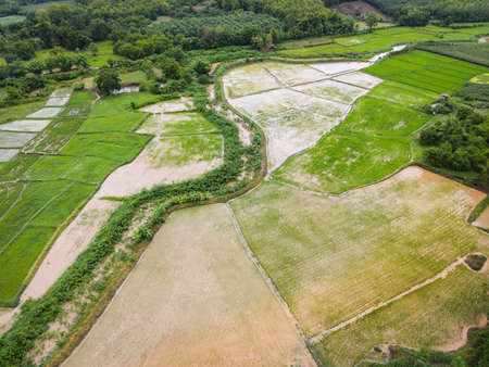 Aerial view of the green rice fields nature agricultural farm background, top view rice field from above with pathway agricultural parcels of different crops in rainy season fields, Birds eye view