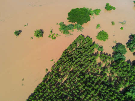 Aerial view river flood forest nature woodland area green tree farmland agriculture, Top view river lagoon pond with water flood from above, Raging river running down jungles lake flowing wild water Stockfoto