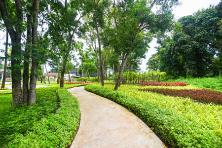 Park tree in the morning with footpath pathway with green plant and flower wood tree, beautiful city park garden nature environment