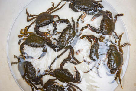 Fresh crab rock, wild freshwater crab on water, forest crab or stone crab river
