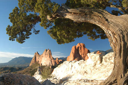 Old tree at Garden of the gods