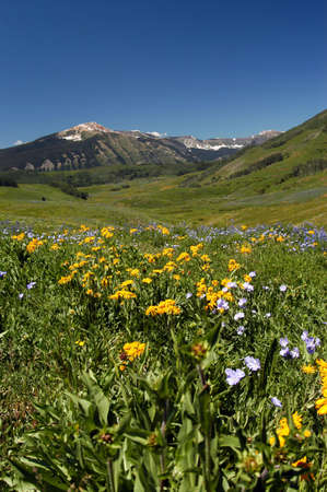 wild flower and meadow