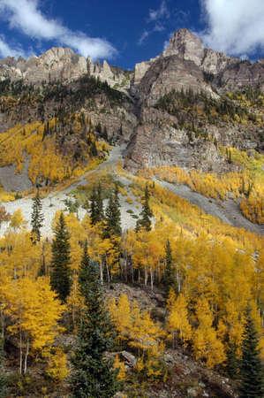 Aspen on mountain side