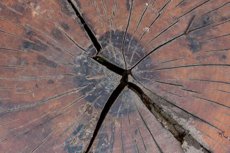 aging brain: wooden texture