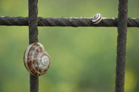 clambering: Mother and Child Snail