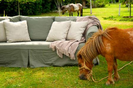 caballo bebe: Sofa at Garden