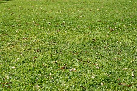 Green grass texture Stockfoto