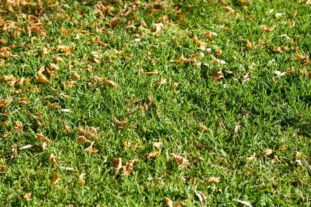 Green grass and dried leaves