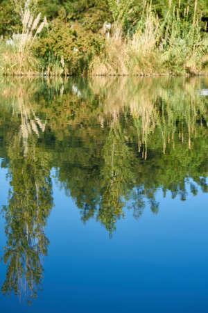 Forest reflection on lake Zdjęcie Seryjne