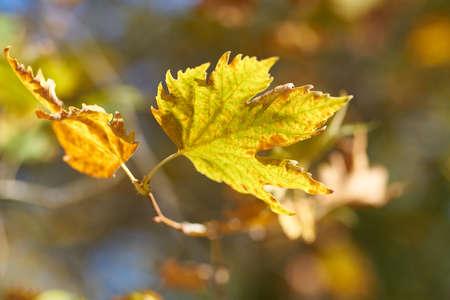 Autumn leaves detail Zdjęcie Seryjne