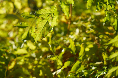 Green plant close-up